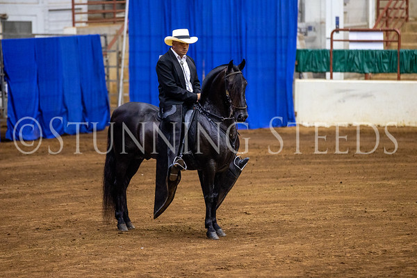 100 Trote y Galope Colts Stallions Geldings