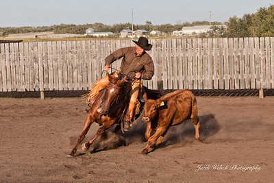 Horses & Working Cow Horse