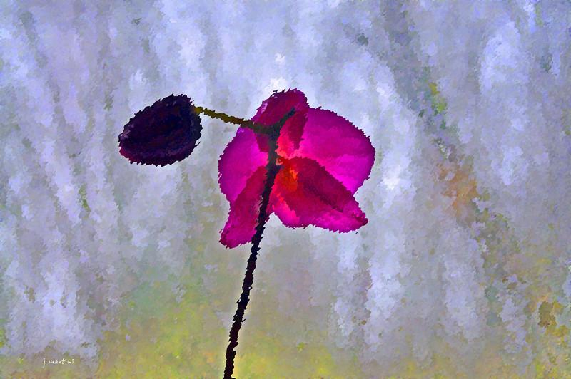 rainy day flower 3-18-2011.jpg