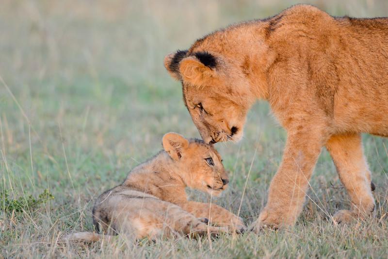 20160215__KET7194_Serengeti_Day_7.jpg