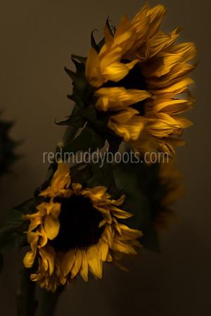 Ephemeral Blooms