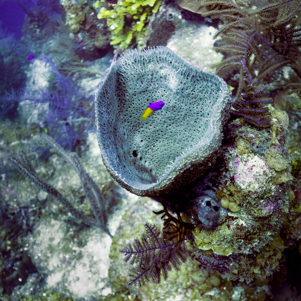 Fish with corals underwater, Tarpon Cays, Belize Barrier Reef, Lighthouse Reef, Belize