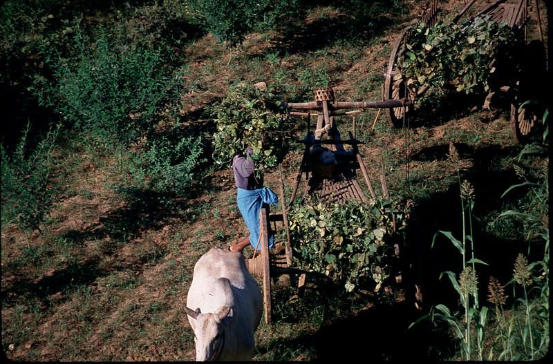 Myanmar1_032.jpg