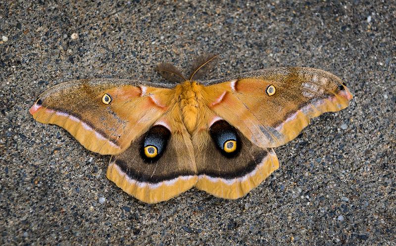 Butterfly 30.jpg