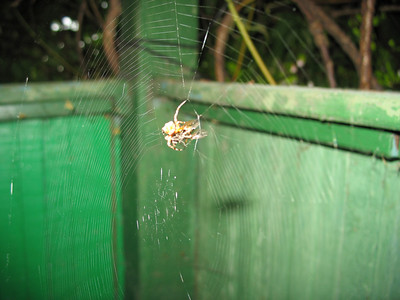 2009-06-28, Spider at the dacha