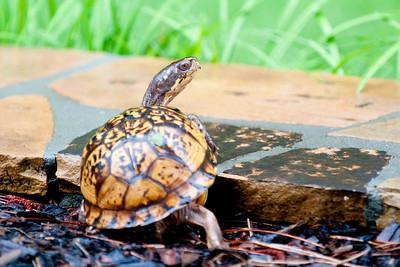 Herbie - the Turtle