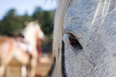 CoreBlox: Horseback riding -  09182008