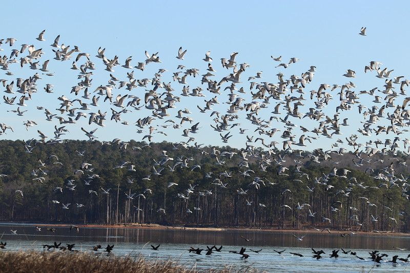 Flock 1