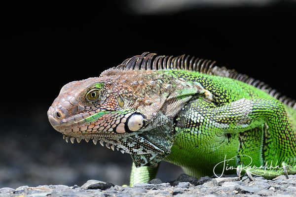 Reptiles, Amphibians, and Insects