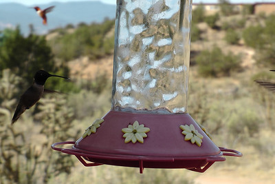 Hummingbirds, Ghost Ranch Art Center, Abiquiu, New Mexico, 2011-07  http://www.ghostranch.org/