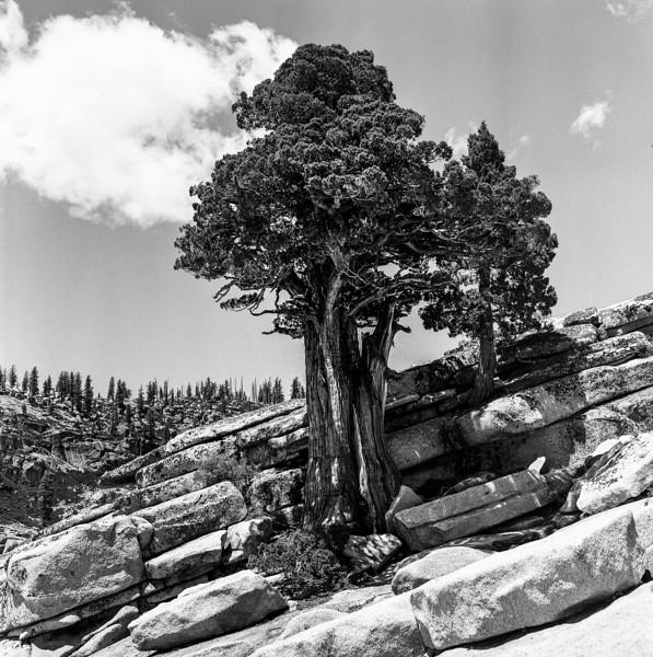 Yosemite_052018023.jpg
