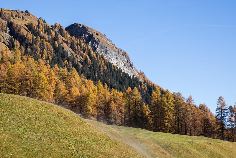Herbst-im-Rheinwald--1.jpg