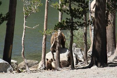 Mammoth Camping 2018