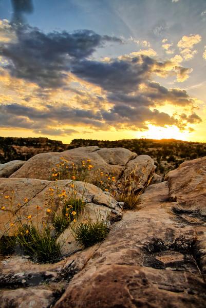Slickrock Sunset-.jpg