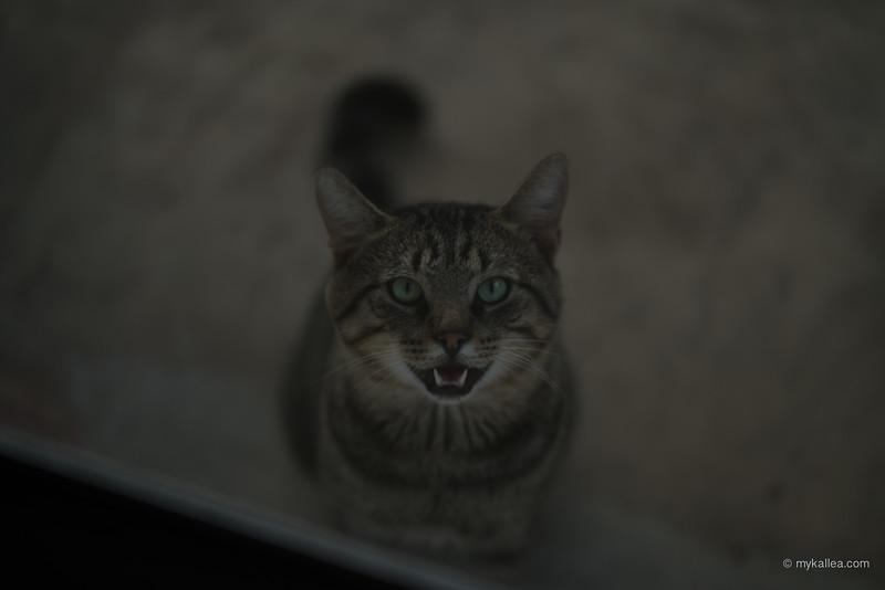 Pets-138.jpg