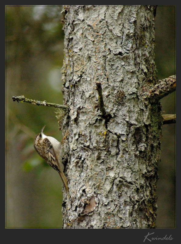 Woodpeckers and other tree-clinging birds