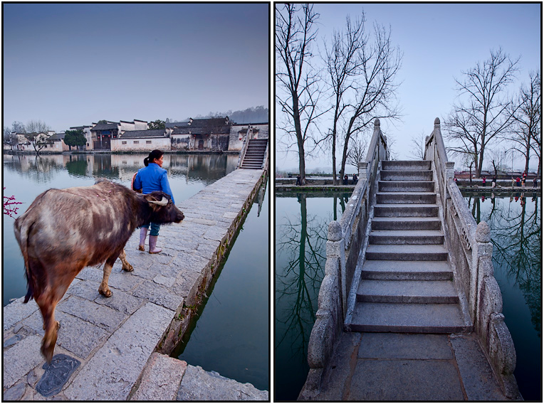 China Hongcun Travel Photography buffelo on bridge
