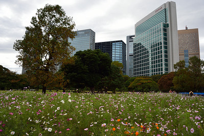 Hamarikyu early fall 2016