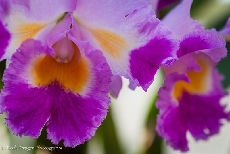 zoo_flowers-1.jpg