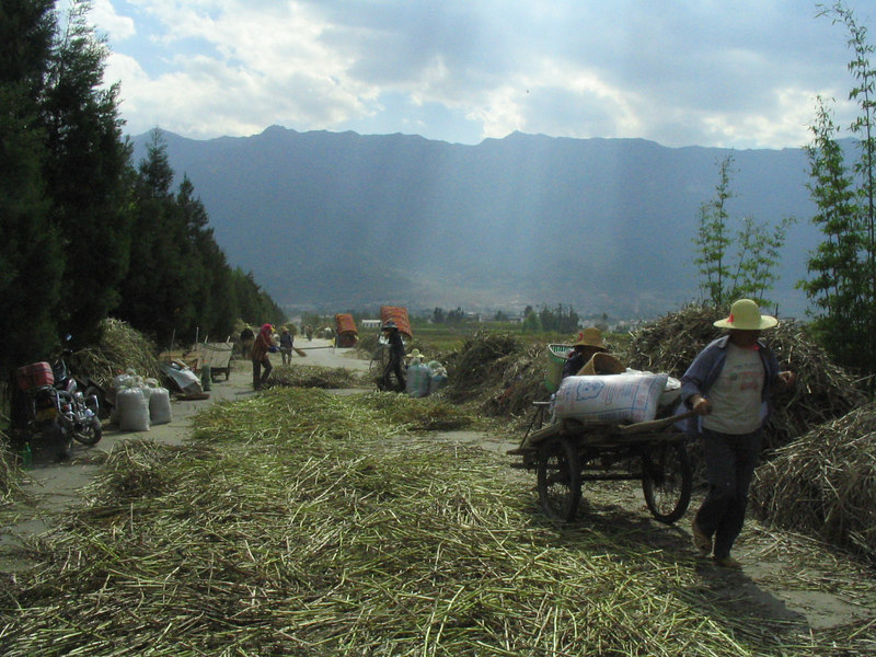 The road down to Erhai Hu filled with local farmers processing their freshing cut crops.