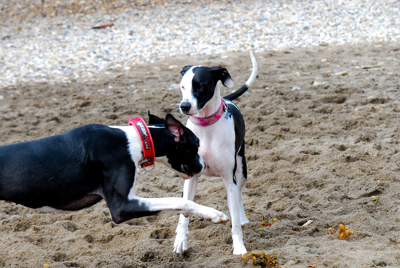 dogs_beach-010.jpg