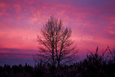 Early Morning Colorful Tree (1 of 1)