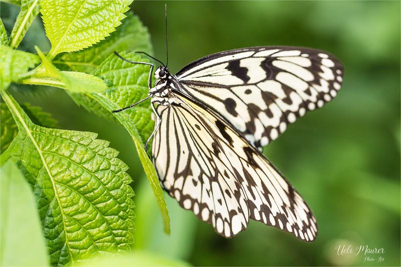 2018-02-07 Papiliorama Kerzers  - 0U5A6403.jpg