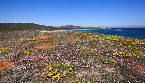 Santa Rosa Island April  (selected photos from main collection)