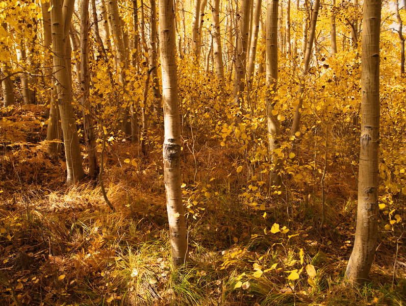 Fall scene_Web.jpg