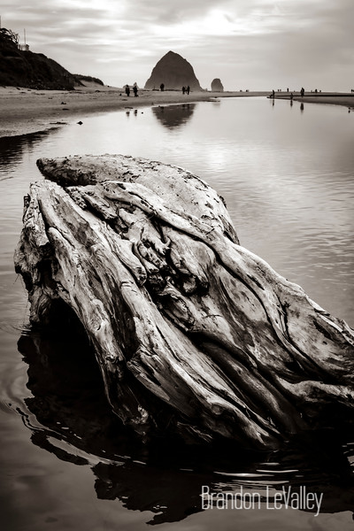 DRIFTWOOD AT HAYSTACK ROCK SEPIA SOFT (1 of 1).jpg