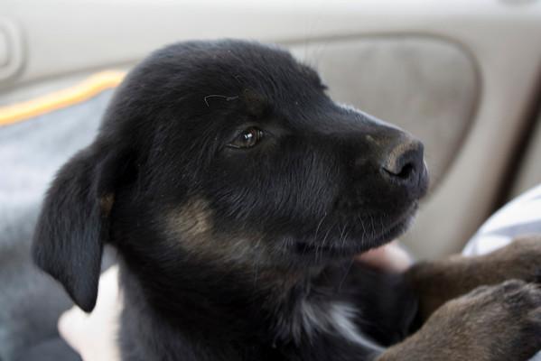 Yuna as a Puppy