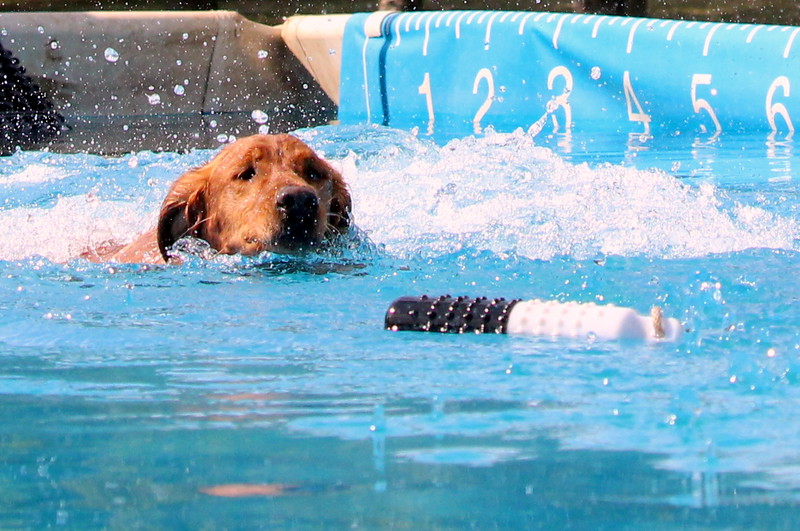 2015.8.6 Winnebago County Fair Dock Dogs (92).JPG