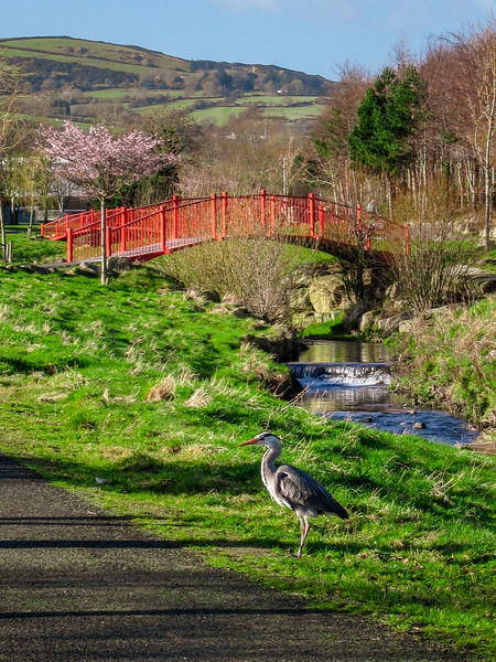 Heron in Sean Walsh Park, Tallaght, the start/end of the Dublin Mountains Way