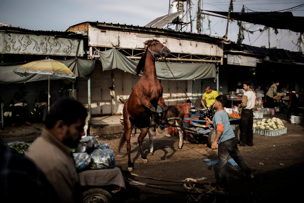 Description of . A Palestinian boy tends to his horse at the central market in Gaza City on November 19, 2012. Food prices have started to rise due to lack of fresh supplies due to ongoing unrest with Israel, as scarce produce is met with more demands by the residents of the Palestinian coastal enclave.  MARCO LONGARI/AFP/Getty Images