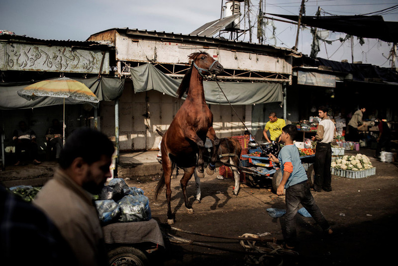 . A Palestinian boy tends to his horse at the central market in Gaza City on November 19, 2012. Food prices have started to rise due to lack of fresh supplies due to ongoing unrest with Israel, as scarce produce is met with more demands by the residents of the Palestinian coastal enclave.  MARCO LONGARI/AFP/Getty Images