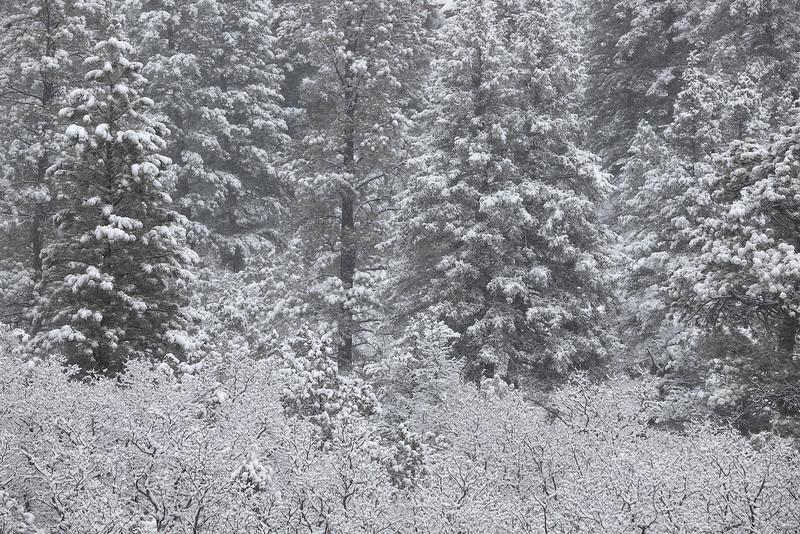 Spring Snowfall