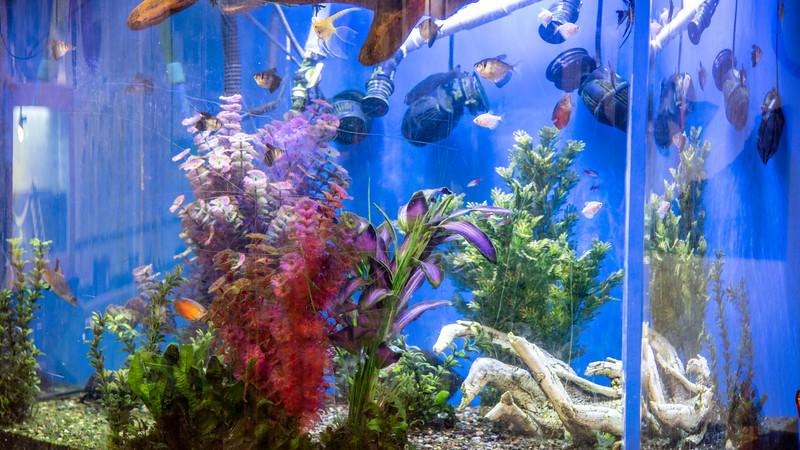 Aquarium Closeup.jpg