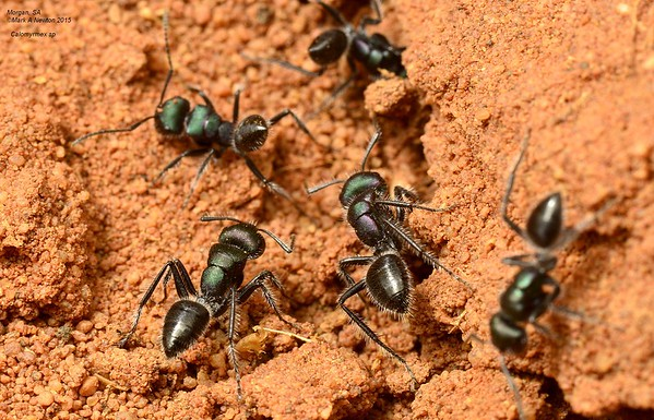 AA_Quick ANT ID Gallery