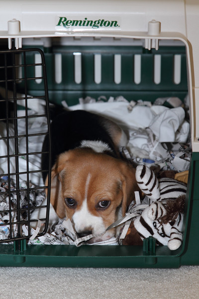 Checking his Crate 2