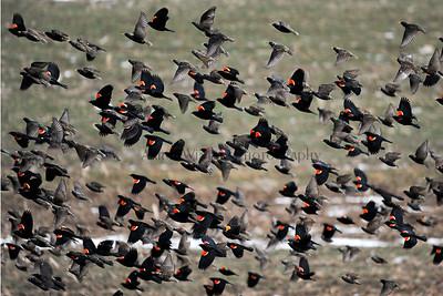 General Purpose Birds