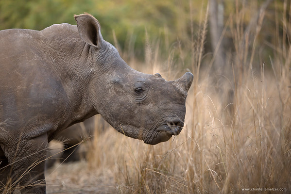 PROJECT | Stand-up 4 Rhinos