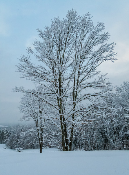 November 2018 Snowfall-_5009233.jpg