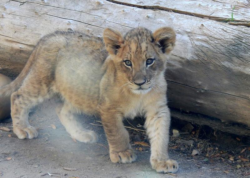 Denver Zoo 2019 (1338).JPG
