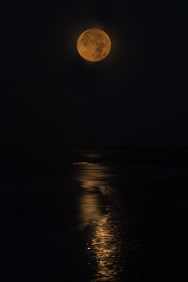 Good- Bye Moon