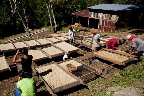 Coffee Drying Trays, in La Reyna, Nicaragua