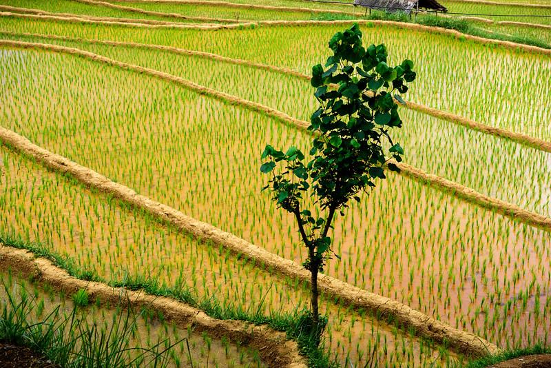 160222 - Bali - 3587.jpg