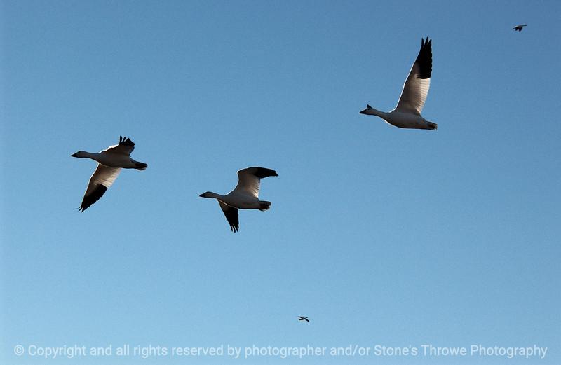 birds-bosque_del_apache_nm-01dec06-3079