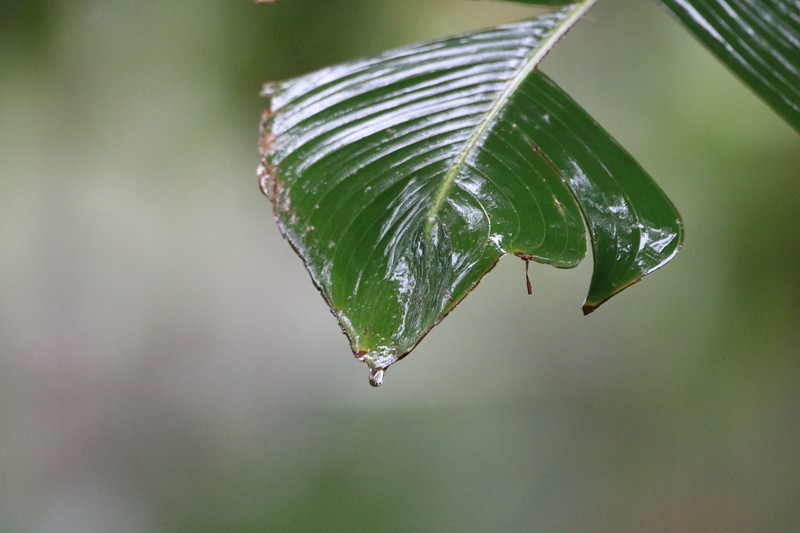 Water on a Leaves