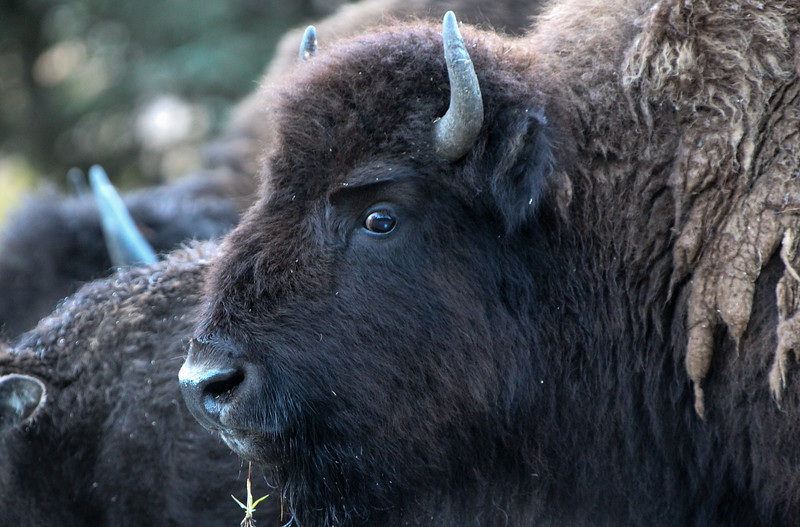 Fall Trip Wyoming & Montana 2016 (38 of 193).jpg