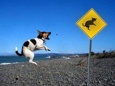 jump dog.jpg